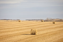 Golden field Royalty Free Stock Images