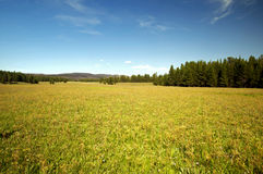 Golden Field Stock Photography