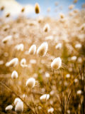 Golden Field Stock Images