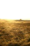 Golden Field Stock Image