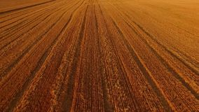 Golden field, aerial view. stock video footage