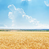 Golden field and clouds in blue sky Stock Images