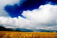 Golden field and cloudy sky Stock Photos