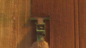 Golden field with combine. stock video
