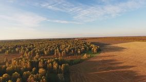 Golden field in early autumn, tops of yellowed trees, clear blue sky. The golden field in the early autumn, the tops of yellowed trees, the clear blue sky. Sunny stock video footage