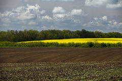 Golden field of flowering rapeseed ( brassica napus) and plowed land with clouds on sky, Stock Images