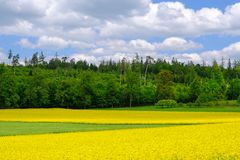 Golden field of flowering yellow rapeseed, Brassica Napus, with beautiful clouds on sky. Hausen AG, Switzerland, Europe stock photos