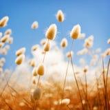 Golden Field of Flowers Stock Photo