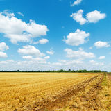 Golden field after harvesting and white clouds Stock Photos