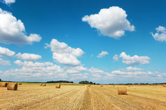 Golden field with hay bales against a cloudy sky Stock Photography