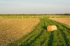Golden field with round hay bales Royalty Free Stock Photography