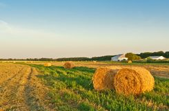 Golden field with round hay bales Stock Image