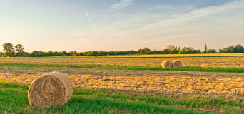 Golden field with round hay bales Royalty Free Stock Photo