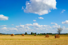 Golden field with round hay bales and dead tree Stock Image