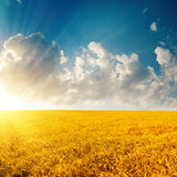 Golden field and sunset in cloudy sky Royalty Free Stock Image