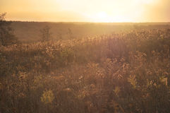 Golden Field Royalty Free Stock Photography