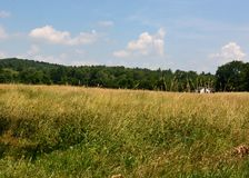 Golden Field under an Azure sky with small white house u distance. Sunny, blue skies with fluffy white clouds. Forest lines the field edges in distance Harrvard royalty free stock photos