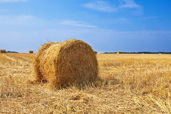 Golden field under the dark blue sky Royalty Free Stock Images