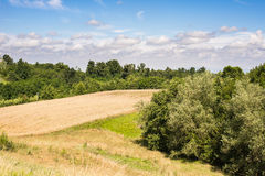 Golden field and woods Royalty Free Stock Images