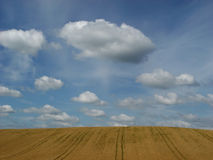 Golden fields. Clouds above a barley field in late summer Stock Image