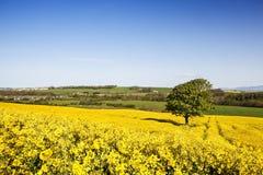 Golden Fields Royalty Free Stock Photo