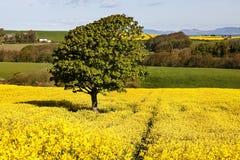 Golden Fields Stock Photography