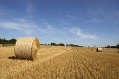 Golden fields Stock Images