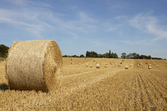 Golden fields Stock Photography