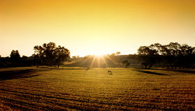 Golden Fields royalty free stock images