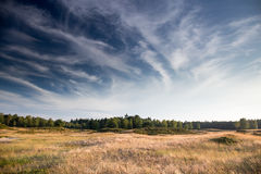 Golden fields. Of Heidestein Zeist (the Netherlands Stock Image