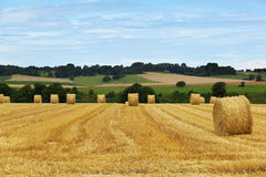 Golden fields in Normandy, France Royalty Free Stock Image