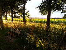 Golden fields. Sunset trees view sunlight stock photography