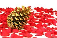 Golden fir apple Royalty Free Stock Images