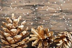Golden Fir Cones with Snow Stock Photos