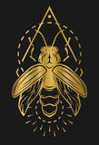 Golden firefly and geometric elements. Firefly and geometric elements. Golden symbol on a dark background Royalty Free Stock Image