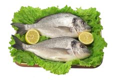 Golden fish. With lettuce and lemon stock images