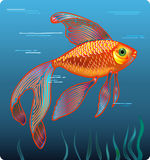 Golden fish Stock Image