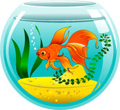 Golden fish in an aquarium. Golden fish in a small aquarium,  and illustration Royalty Free Stock Images