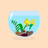 Golden fish in aquarium. Golden fish in a small aquarium with plants and stones Stock Image