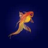 Golden fish  on blue background. Golden koi fish  on blue background Stock Images
