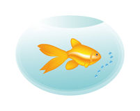 Golden fish in bottle Stock Photo