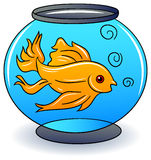 A golden fish in a bowl. Against white background illustrated image Royalty Free Stock Images