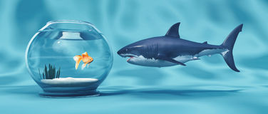 Golden Fish in a bowl. And a big shark.This is a 3d render illustration Royalty Free Stock Photos