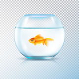 Golden Fish Bowl Realistic Transparent. Round wall water tank bowl aquarium with single golden fish realistic image on transparent background vector illustration Stock Images