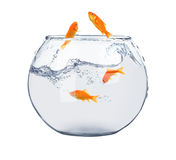 Golden fish in fish bowl stock photos