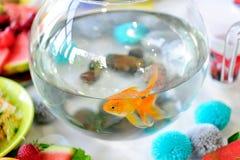 Golden fish in fish bowl Royalty Free Stock Photo