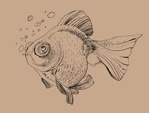 Golden fish, hand painted drawing of outline. Isolated on brown background Stock Photography