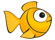 Golden fish isolated Stock Image