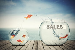 Golden fish jumping to another aquarium. Picture of golden fish jumping to another aquarium with sales text Stock Photography