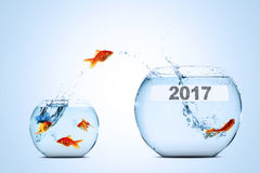 Golden fish leaping to larger fishbowl. With number 2017, isolated on white background stock image
